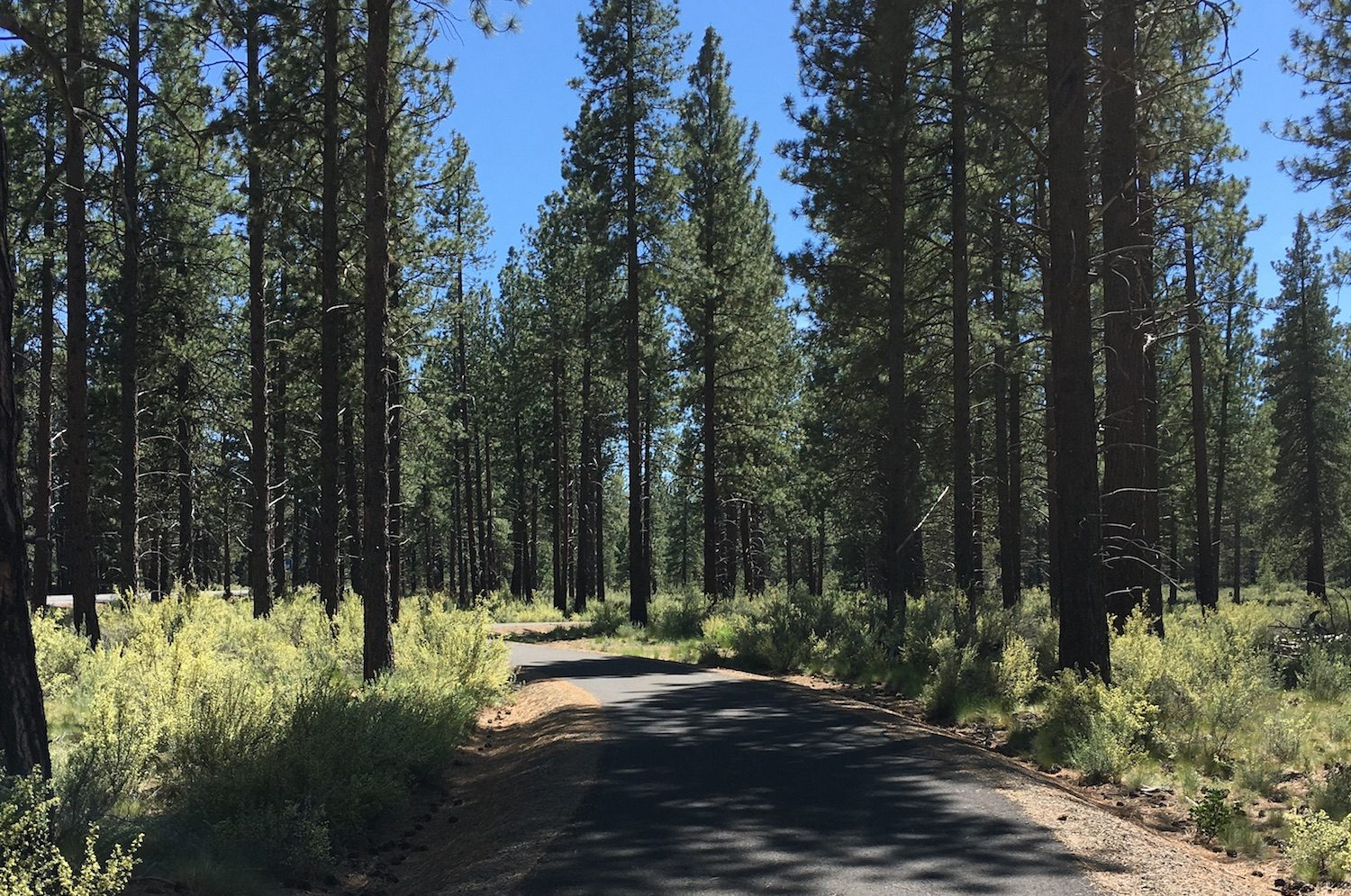 paved path through ponderosa forest