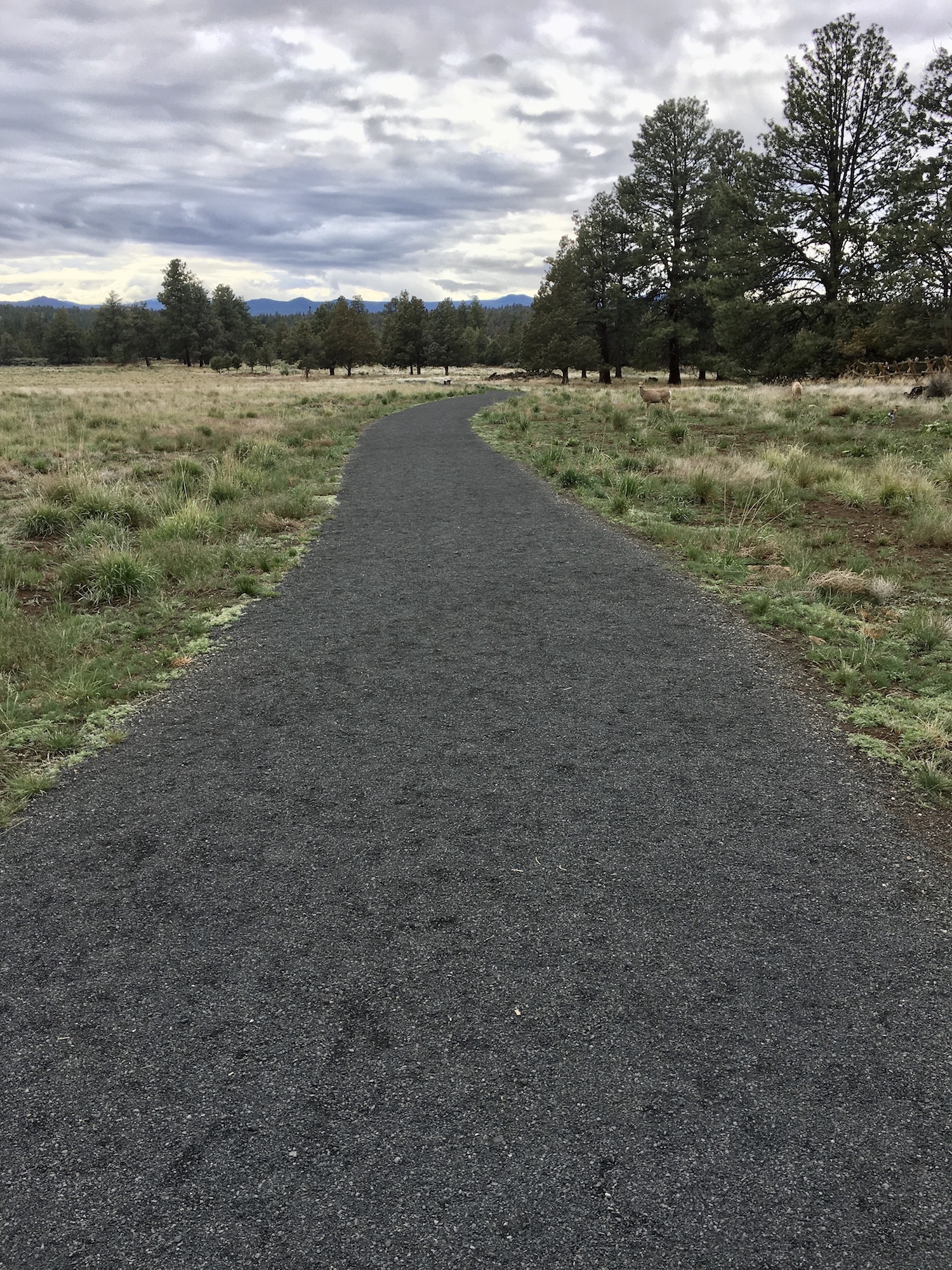 gravel flat path at riley ranch