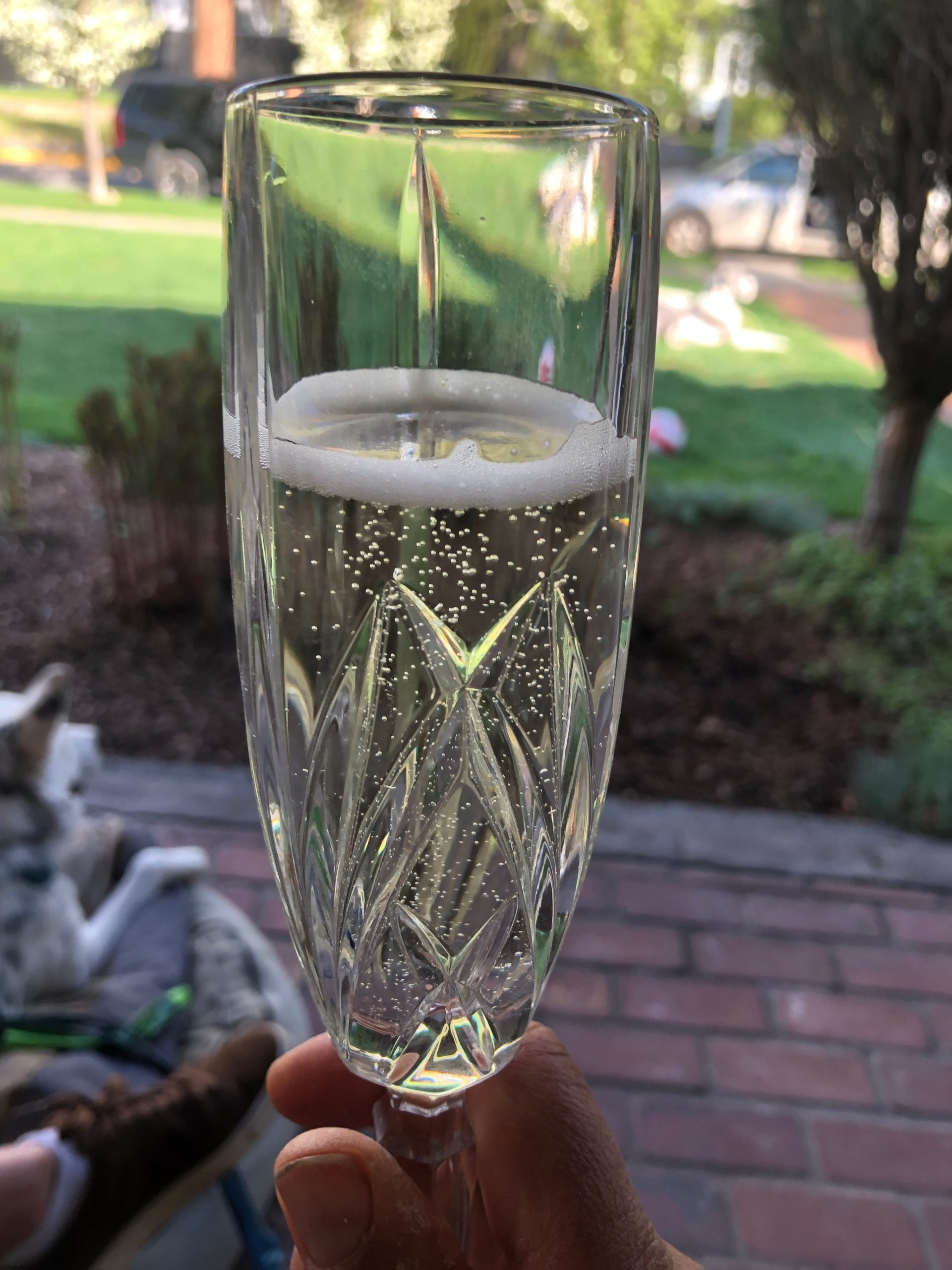 glass of champagne in leahs yard