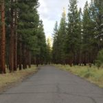 paved road goes through ponderosa forest at shevlin park