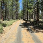 gravel trail with pine needles through forest