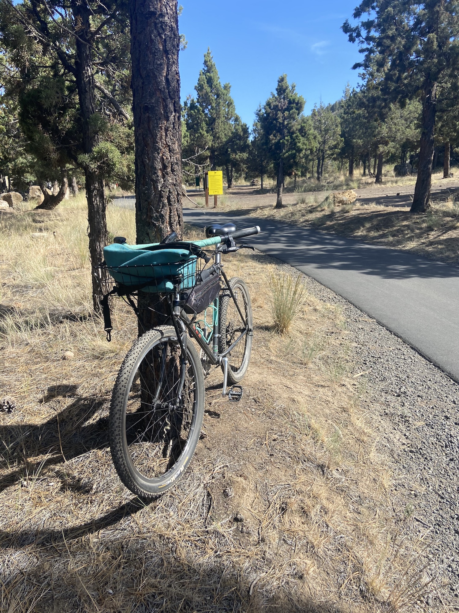 bike against tree next to larkspur trail